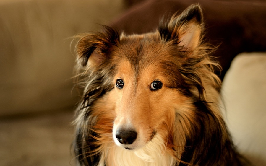 На какую породу собак похожи представители разных знаков Зодиака
