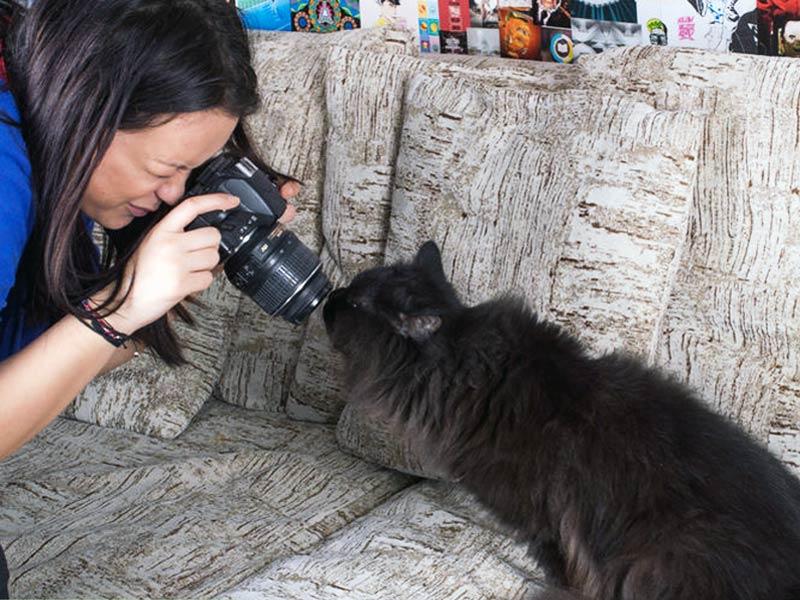 фотография кошки