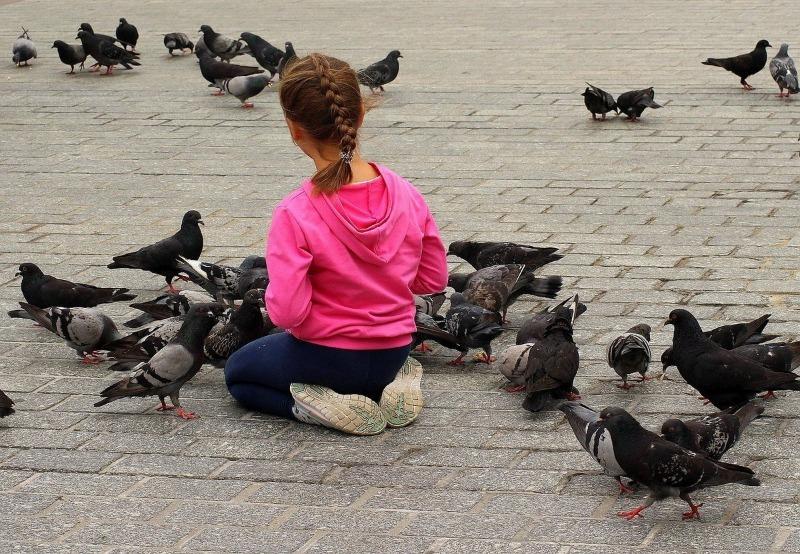4 причины, почему не стоит кормить голубей на улице