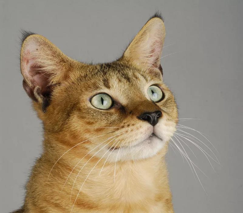 Зрительный контакт: о чем говорит положение зрачка у кошек
