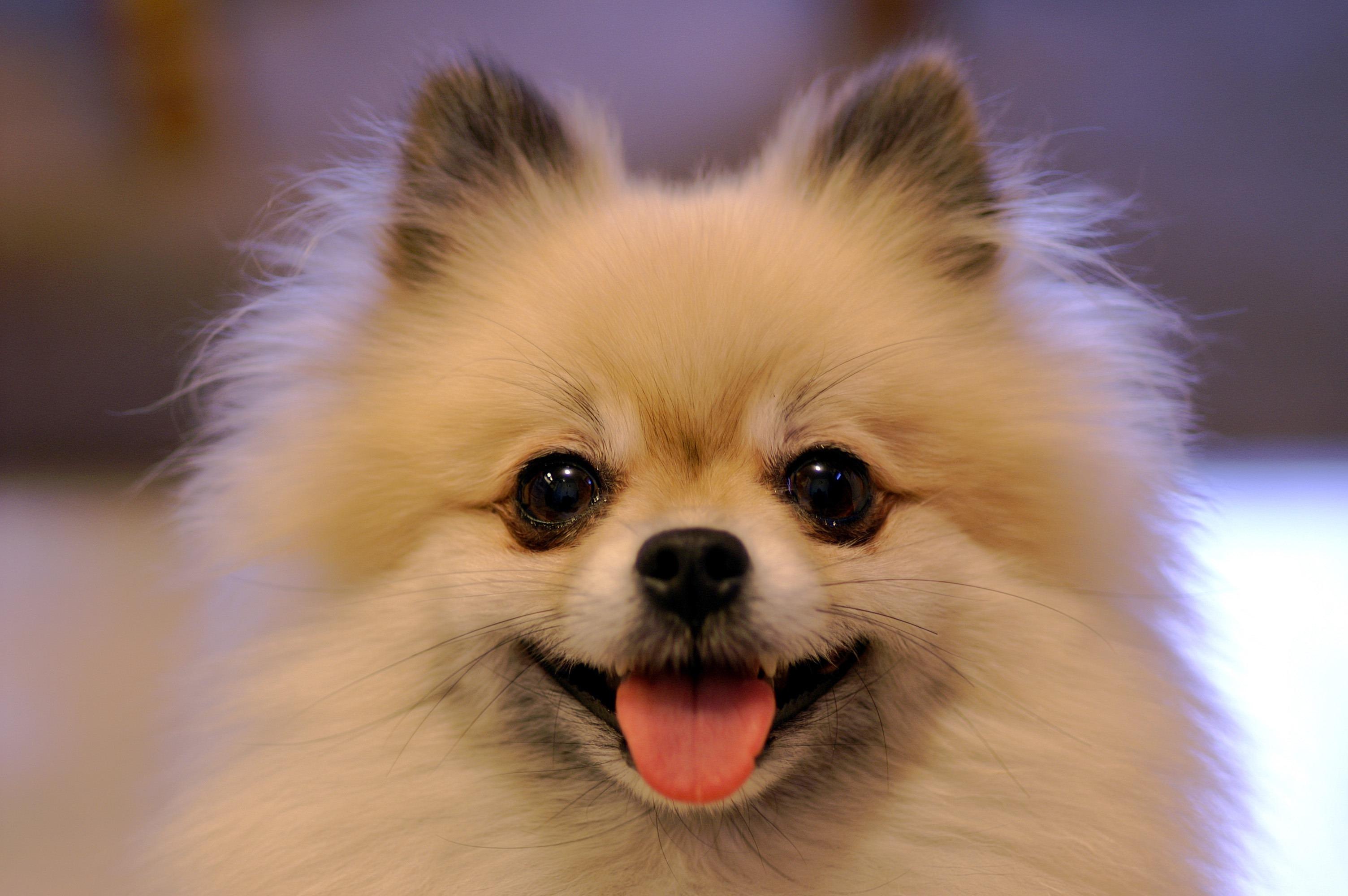 Что важно знать о глистах в сердце собаки