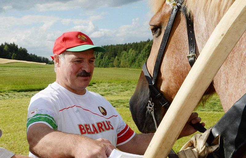 Кошки, индоутки и другие животные Александра Лукашенко