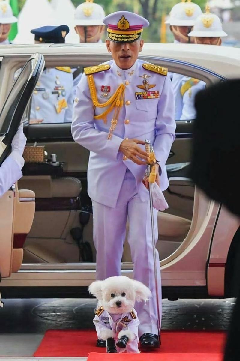 Пудели короля Таиланда