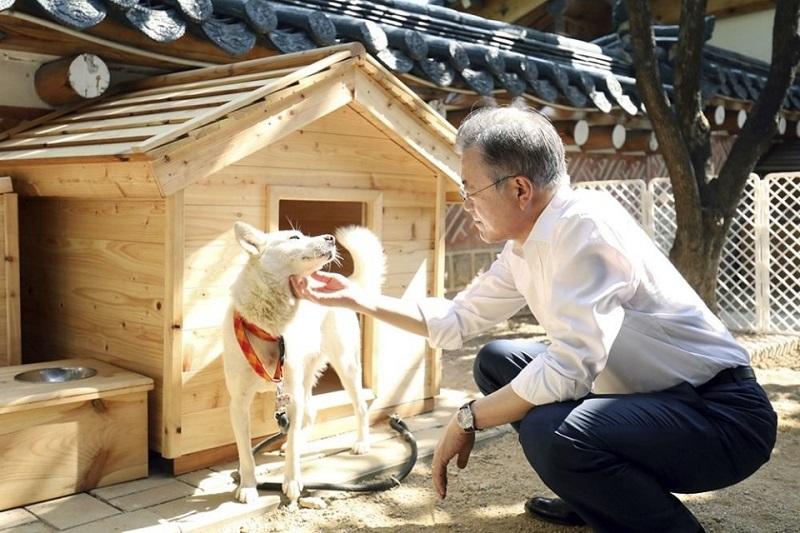 Собачий городок в администрации президента Южной Кореи