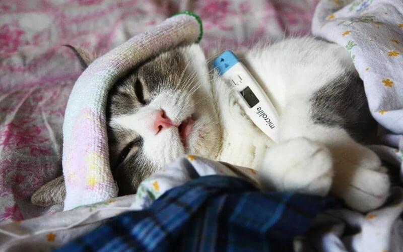 Кошка заболела