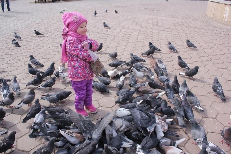 Кормить голубей на улице