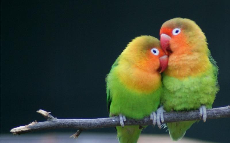Животная любовь: 14 птиц и зверей, которые создают самые крепкие пары