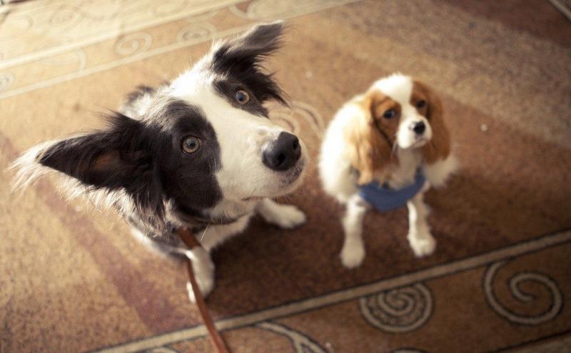 Что за порода: 10 собак из известных фильмов и мультфильмов