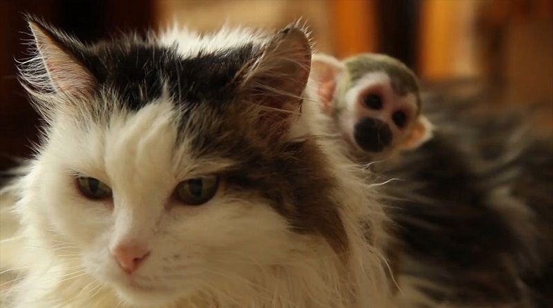 Мама для маленьких обезьянок