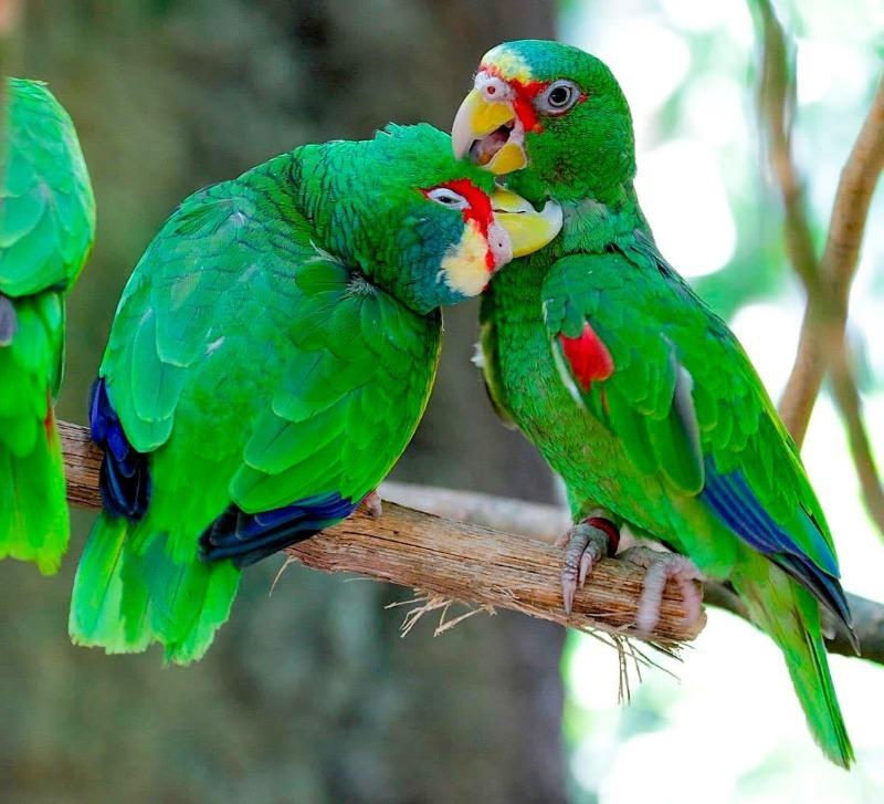 Животная романтика: 8 зверей и птиц, которые добиваются внимания партнера самыми изящными способами