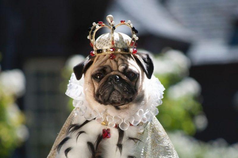 Какие домашние животные были у российских императоров