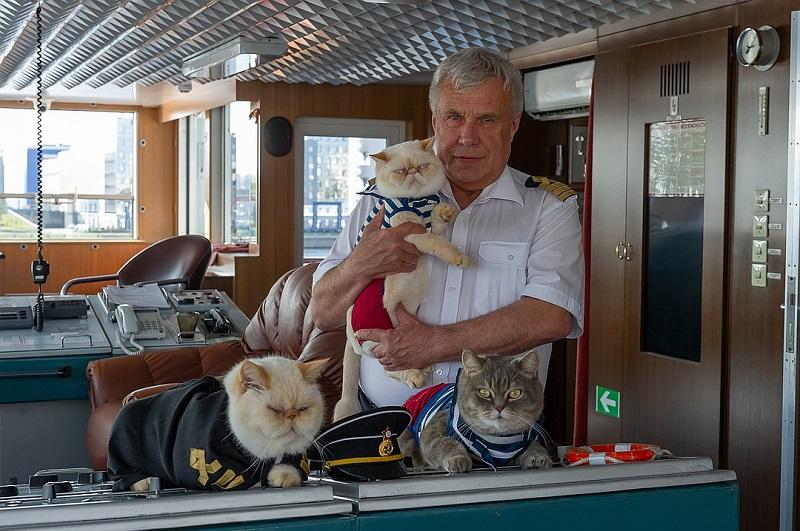 Почему моряки считали присутствие кошек на корабле счастливым знаком