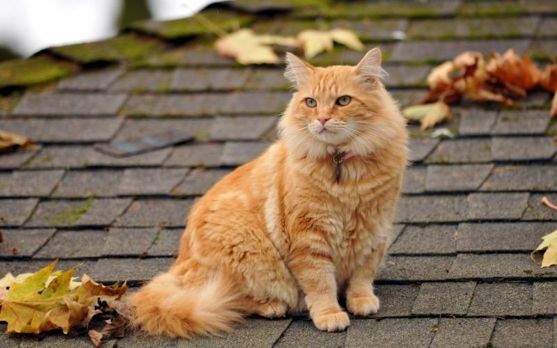 Стереотипы о влиянии цвета шерсти на характер кошки: что правда, что ложь