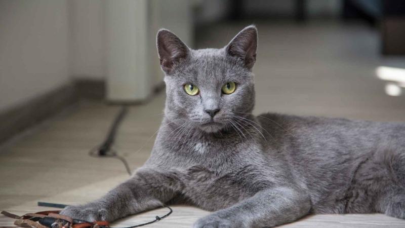С какой породой кошек можно сравнить ваш знак Зодиака