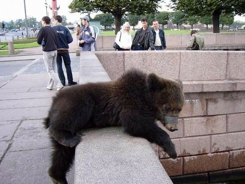 Почему иностранцы считают, что по улицам всех российских городов ходят медведи