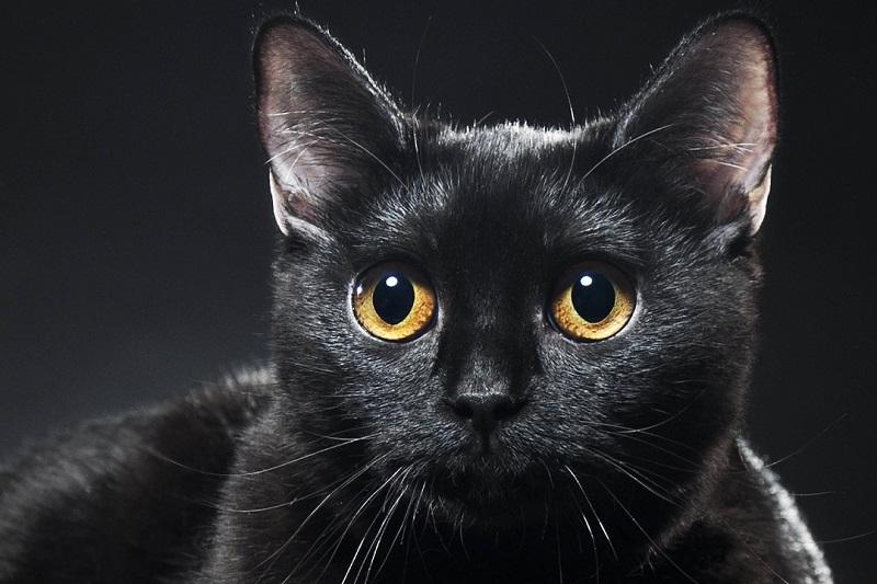 Наблюдение за котом