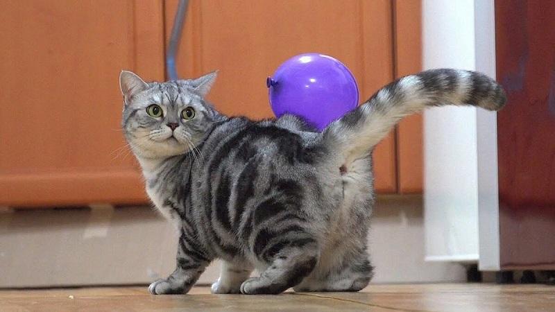 Серый кот Мики