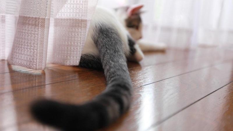 Кошачьи сигналы хвостом, которые позволят лучше понять настроение своего питомца