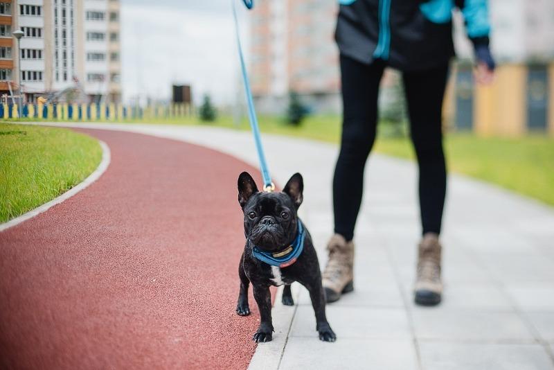 За что при выгуле своей собаки могут оштрафовать хозяина