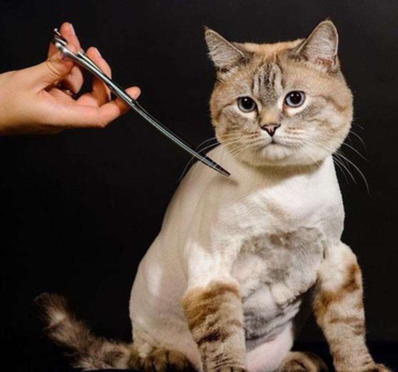 как правильно подстричь кошку
