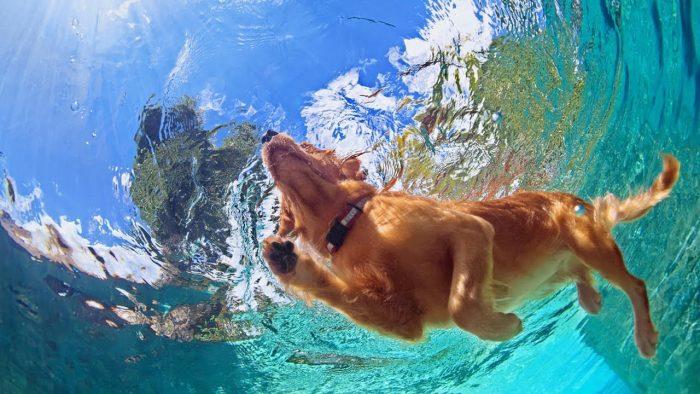 Можно ли купать собаку в жару