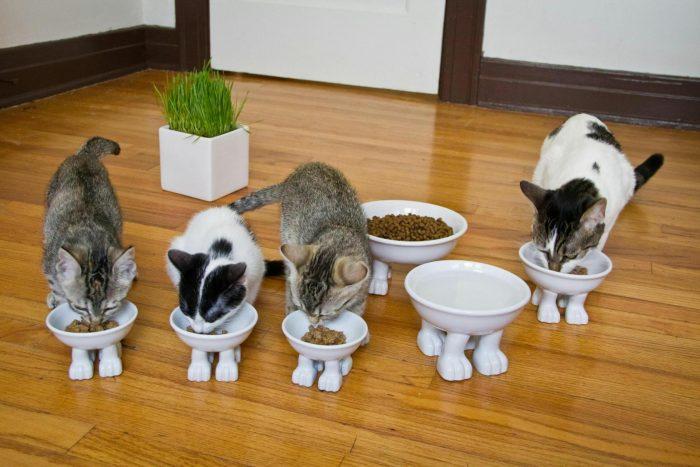какая миска для кошки лучше всего