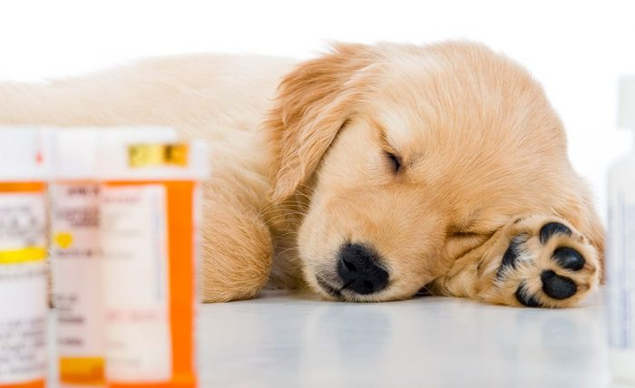 Лучшие успокоительные средства для собак