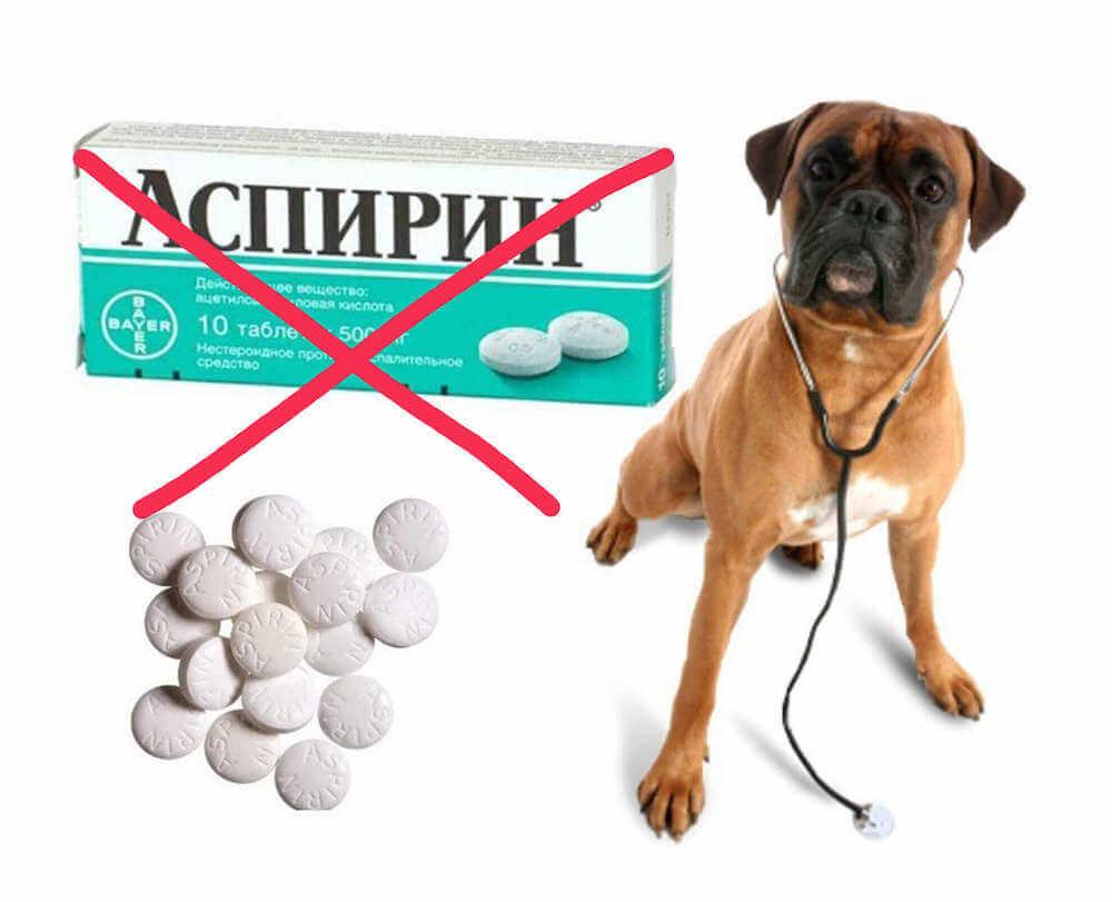Какие лекарства нельзя давать собакам