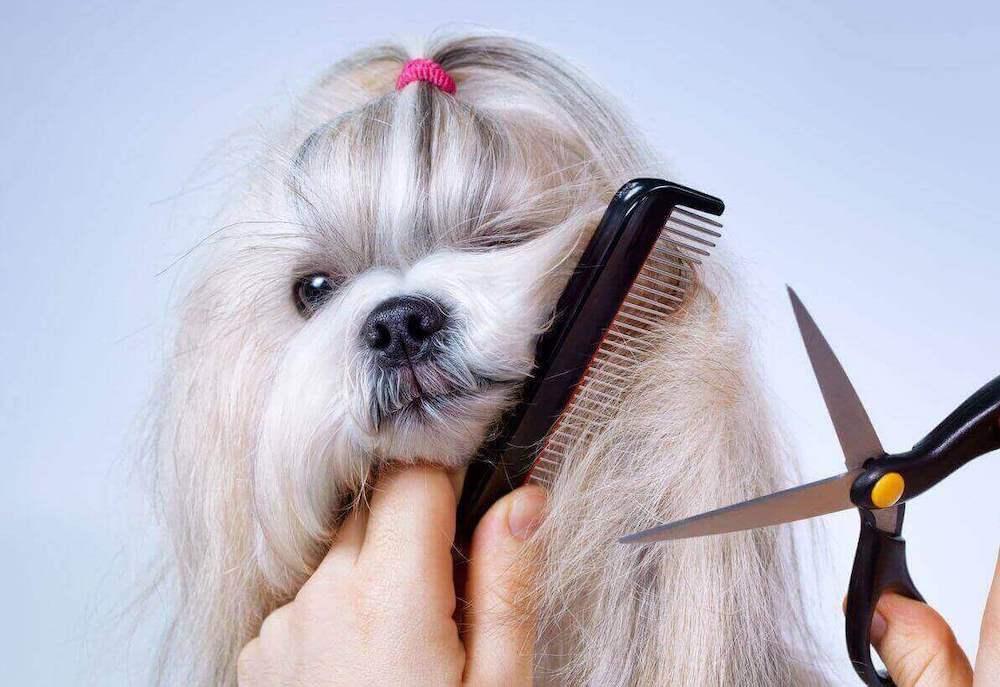 Какие породы собак нужно стричь
