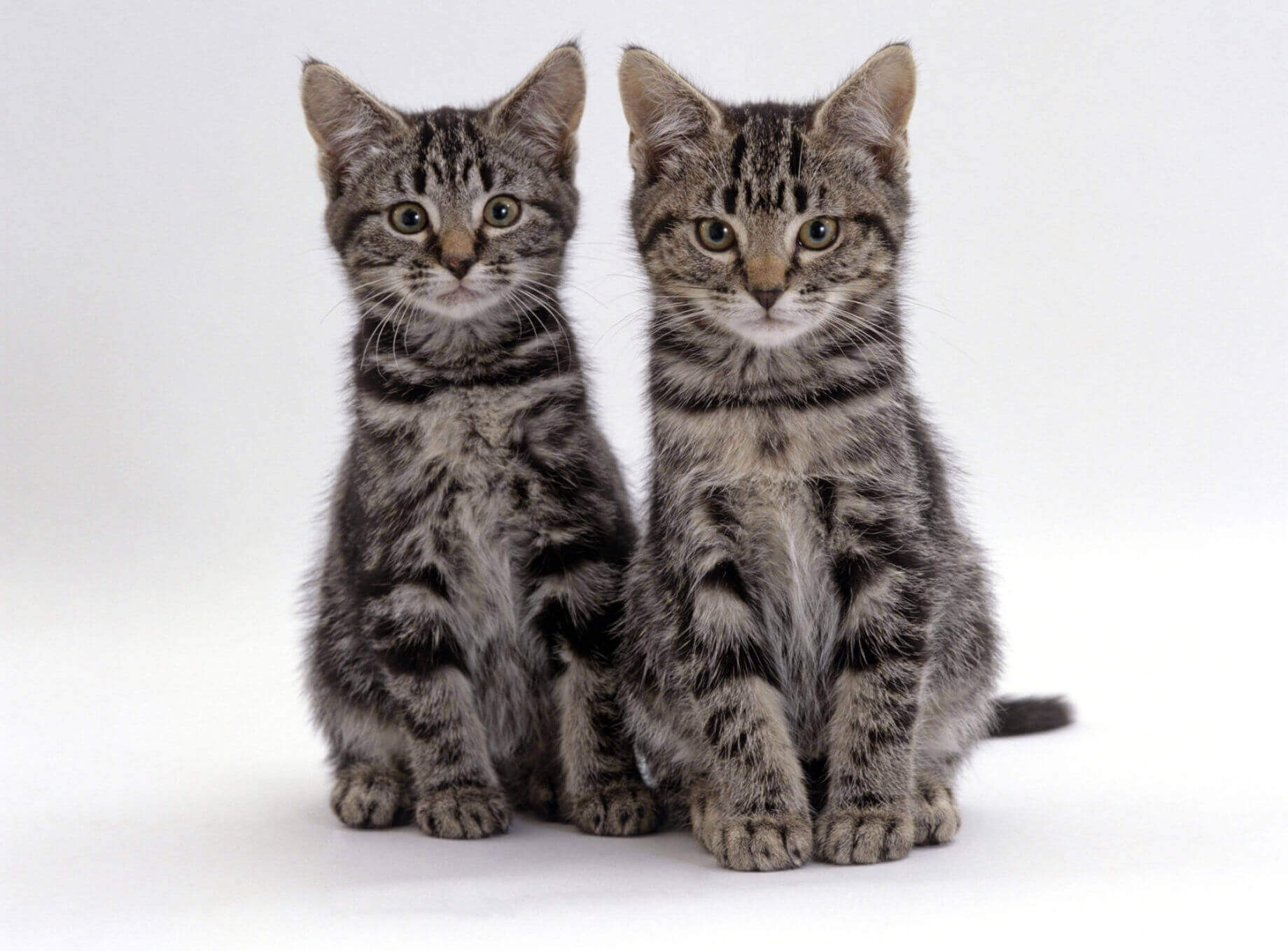 Кот или кошка: как определить пол питомца