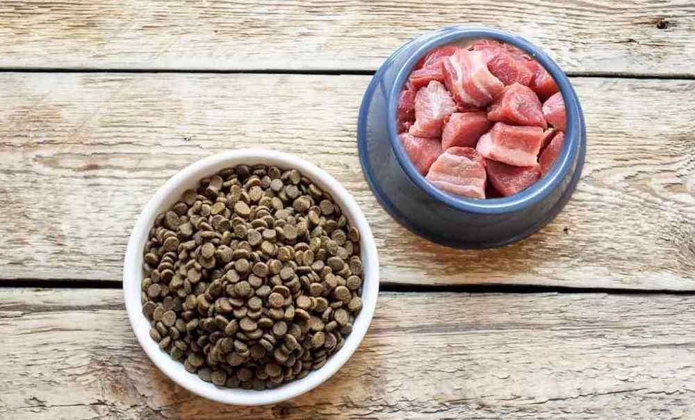 Можно ли кормить собаку сухим кормом и натуральной едой