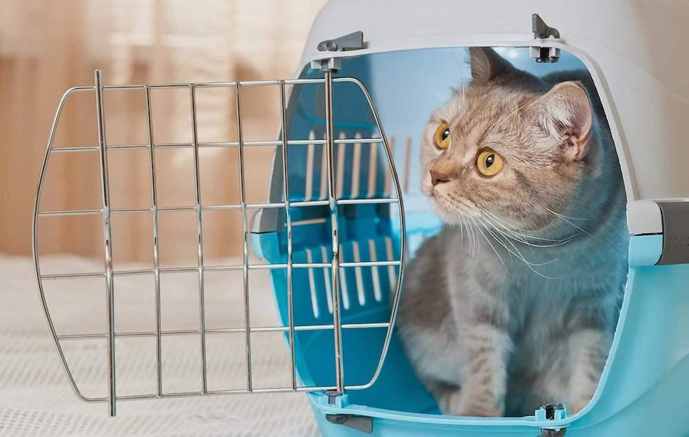 Как подобрать переноску для кота