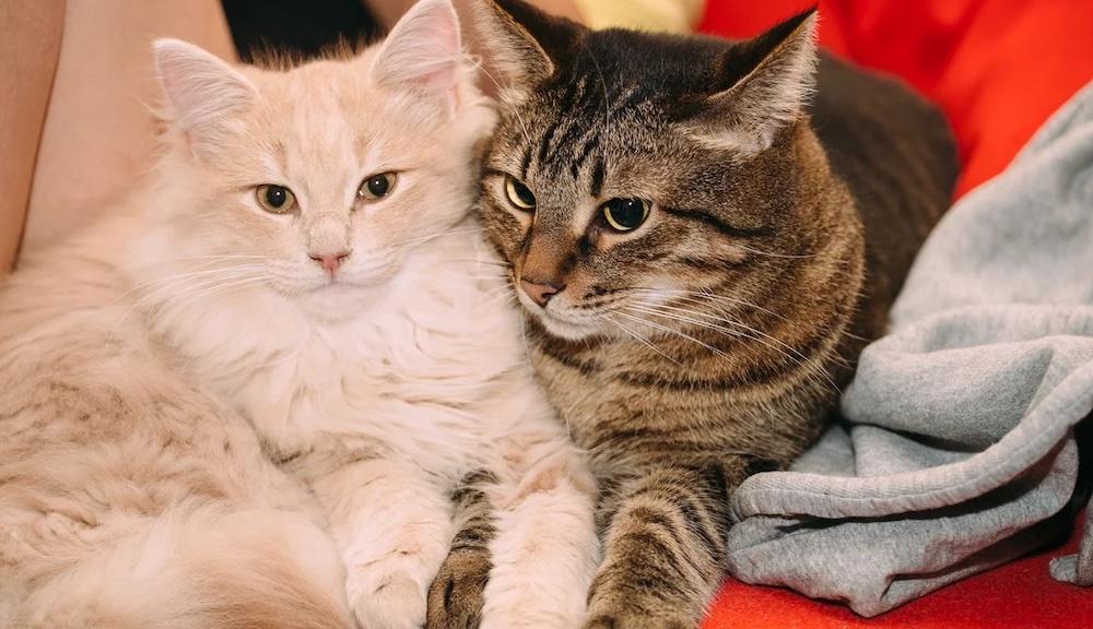 Как подружить кошек или котов разного возраста