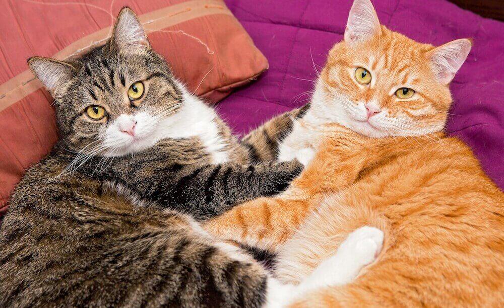 Полезные советы о дружбе между котами