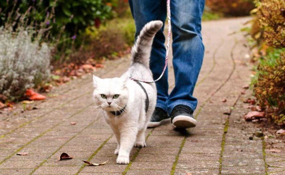 Нужно ли выгуливать кошку