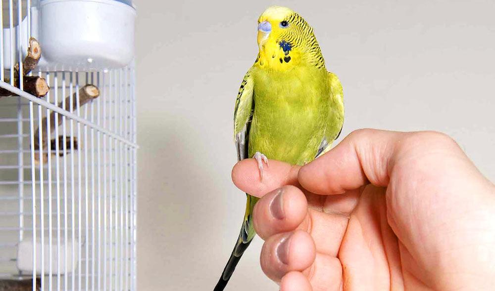 Завоевываем доверие птицы