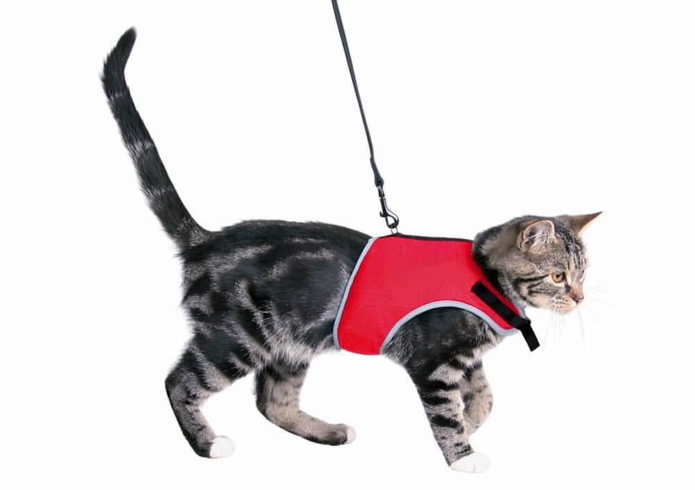 Как подобрать кошачью шлейку