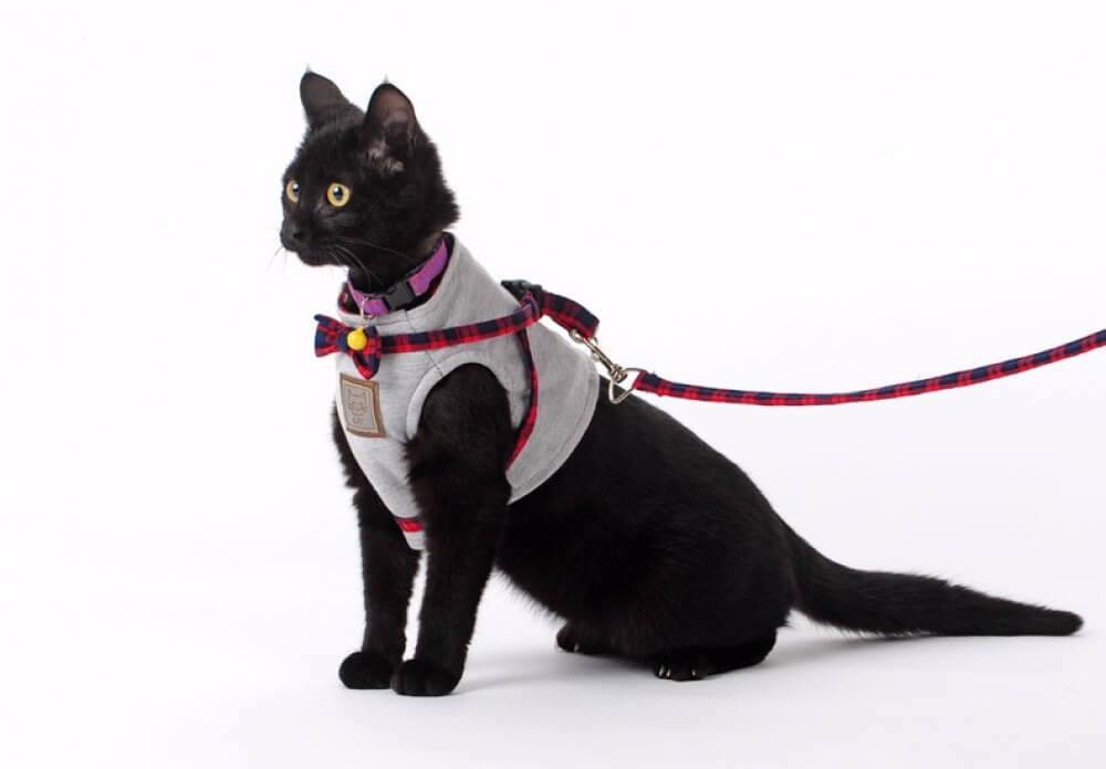 Кот на шлейке: полезные советы