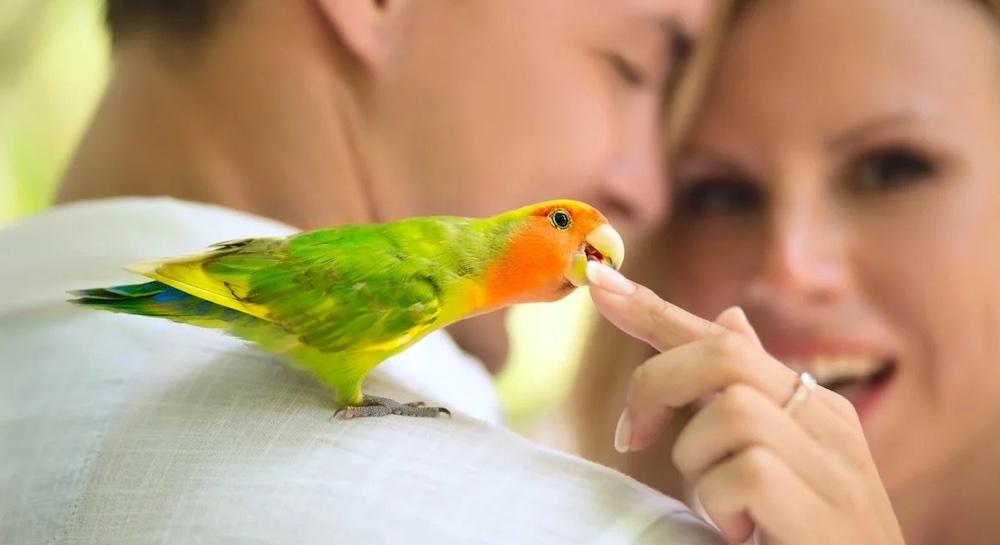 отучить попугая Кусаться за пальцы-полезные советы