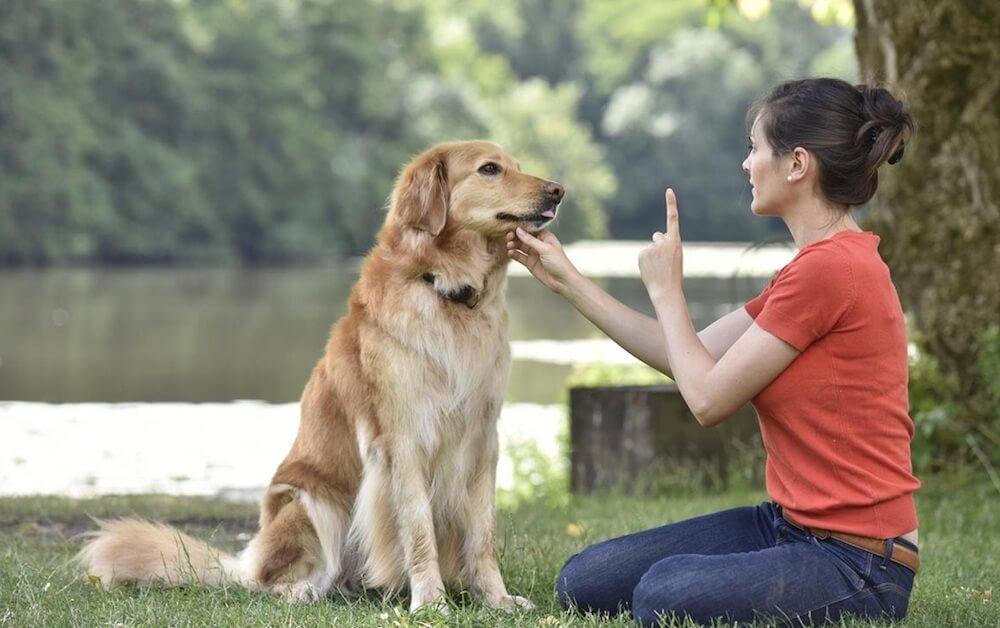 Как обучить щенка или взрослую собаку команде «лежать»