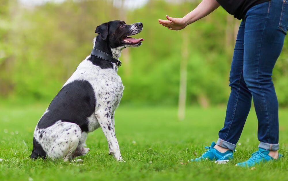Обучение собаки командам жестами