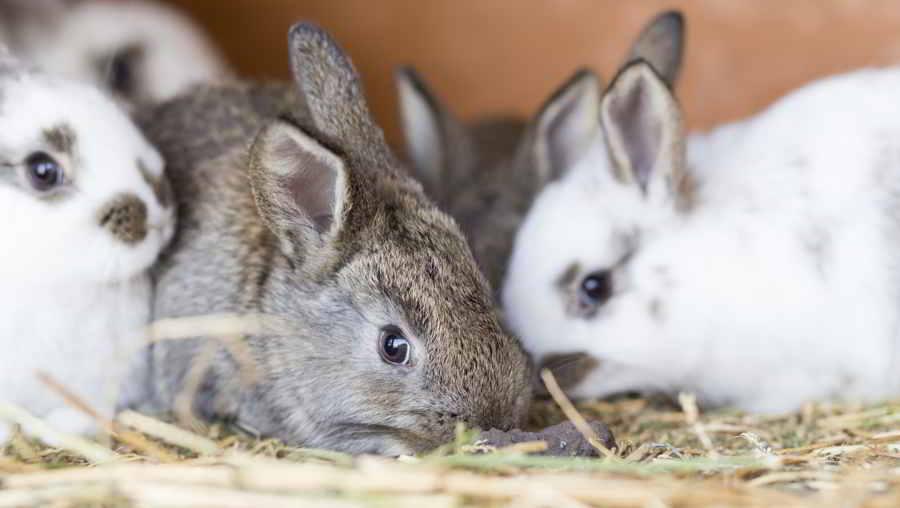 Декоративные кролики в клетке