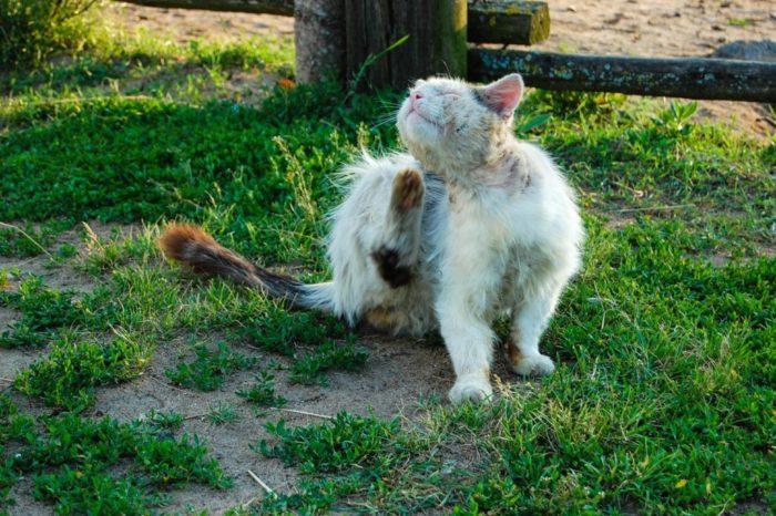 Грязный кот