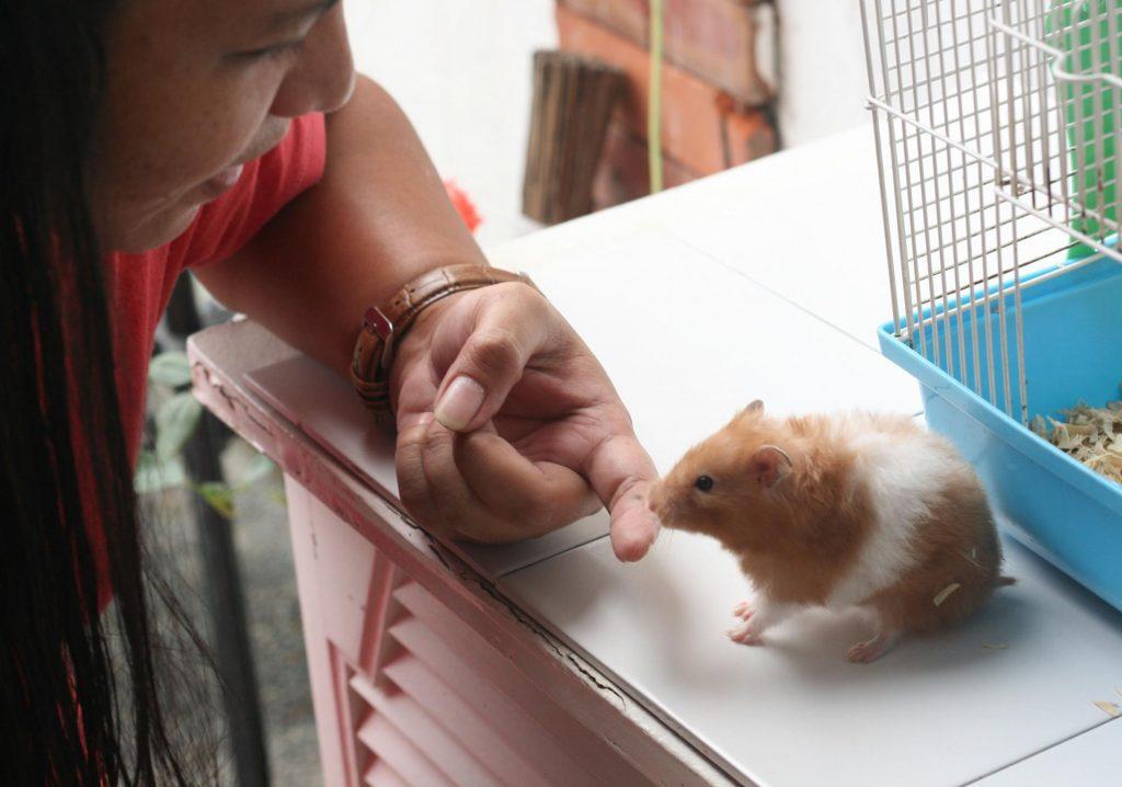 Хомяк нюхает палец