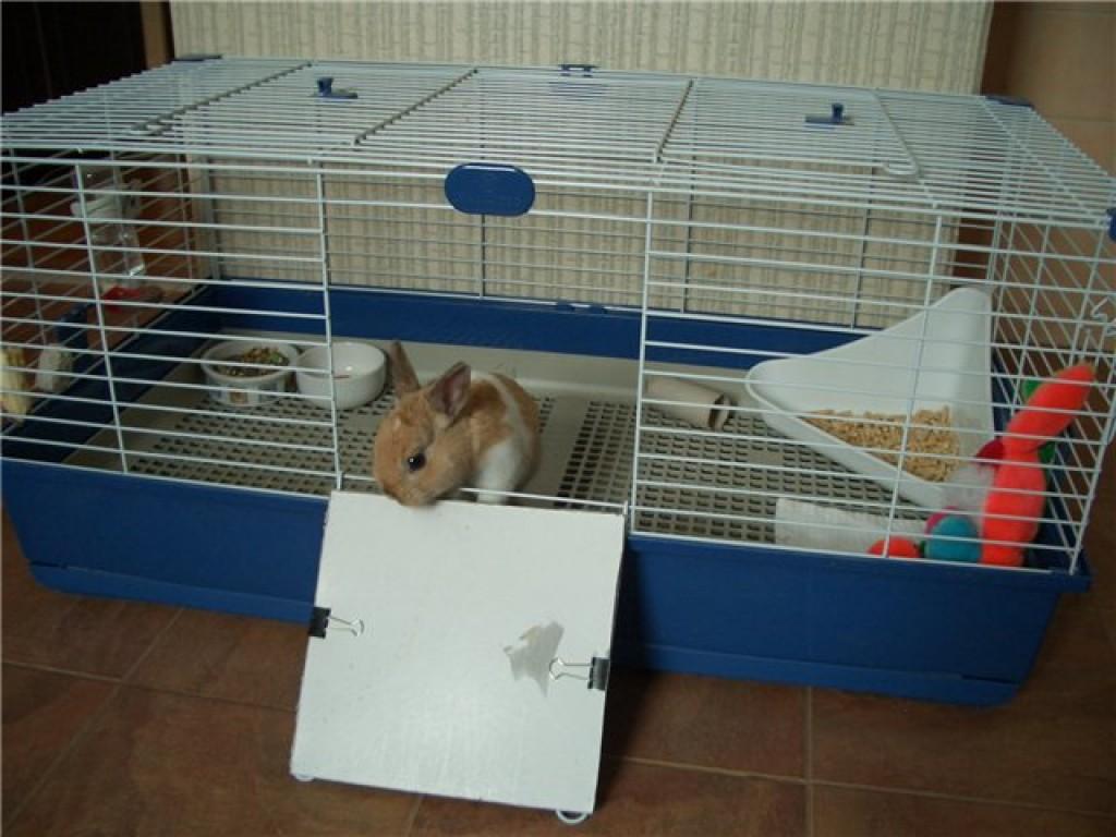 Клетка для крысы своими руками фото 89