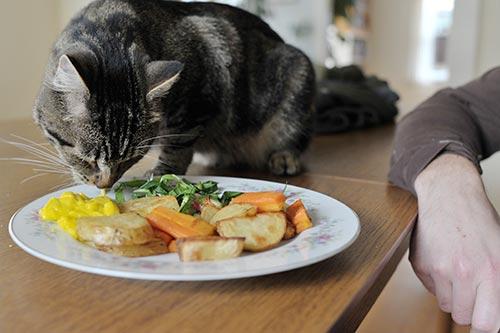 Кот обнюхивает еду на тарелке
