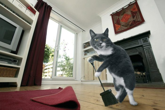 Кот с метлой