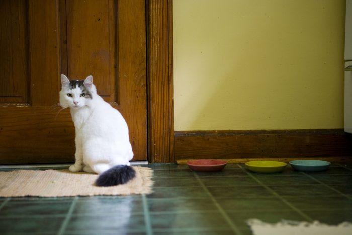 Кот сидит возле двери