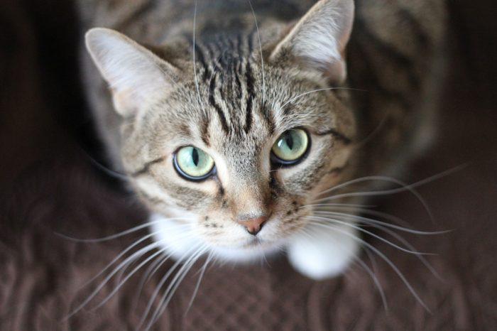 Кот смотрит наверх