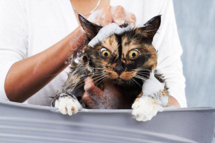 Кот в шампуне